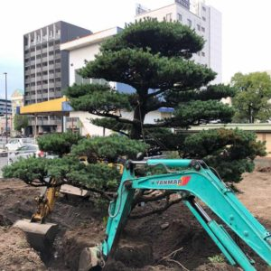 大分市で樹木の移植